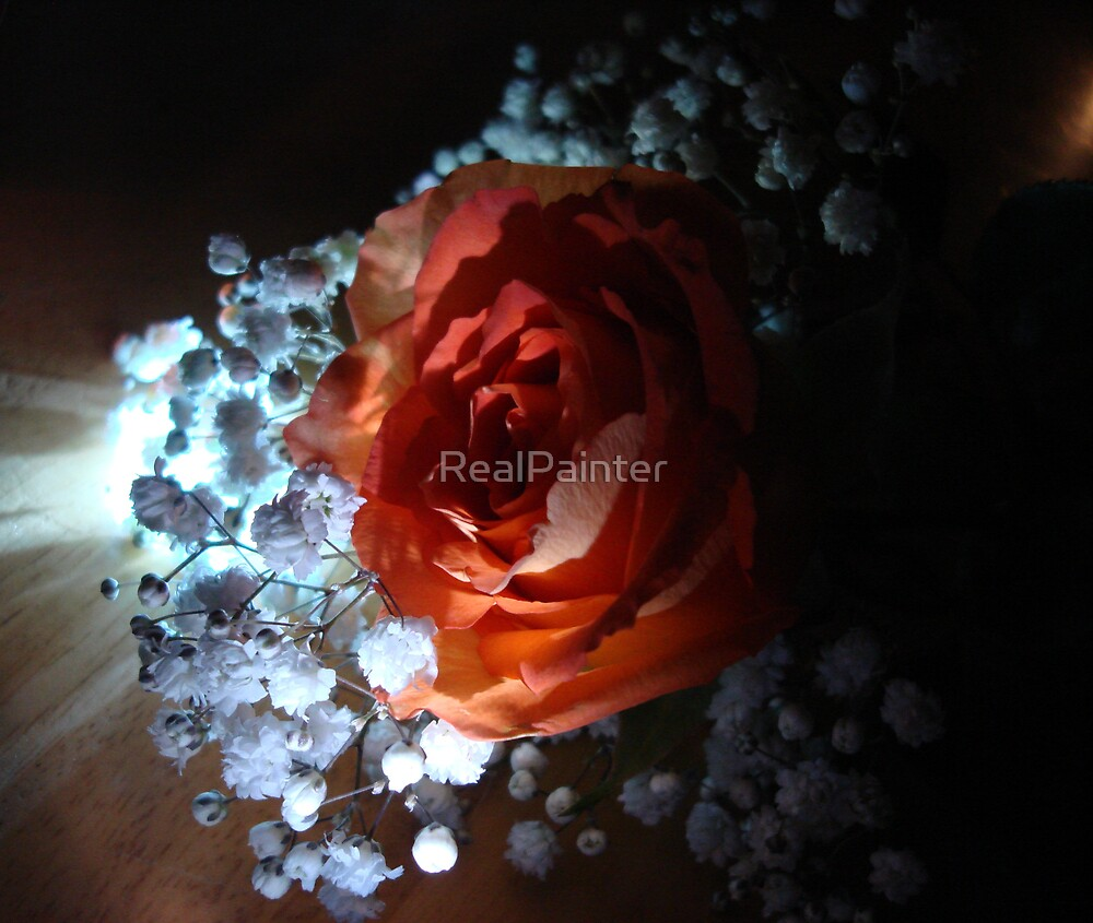 Our Flag Red White and Blue Rose! by RealPainter
