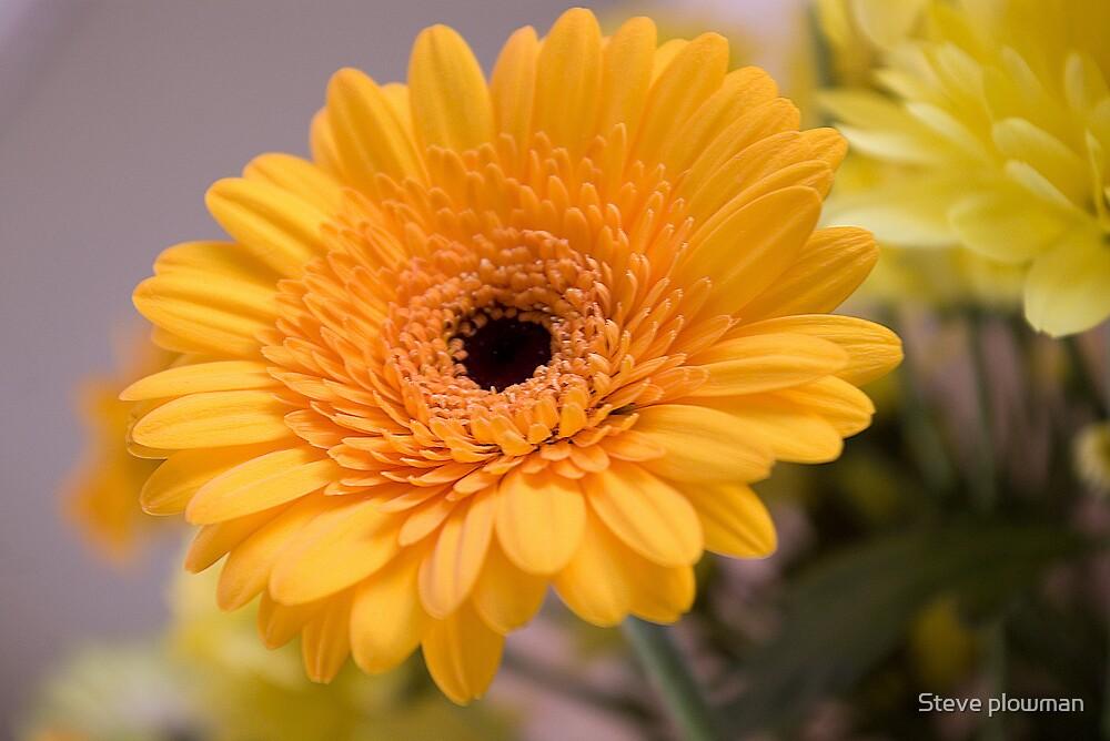 Let the Sun shine by Steve plowman