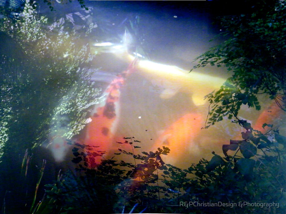 Koi Pond by R&PChristianDesign &Photography