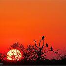 AT SUNSET IN KRUGER - SONSONDERGANG IN KRUGER PARK by Magriet Meintjes