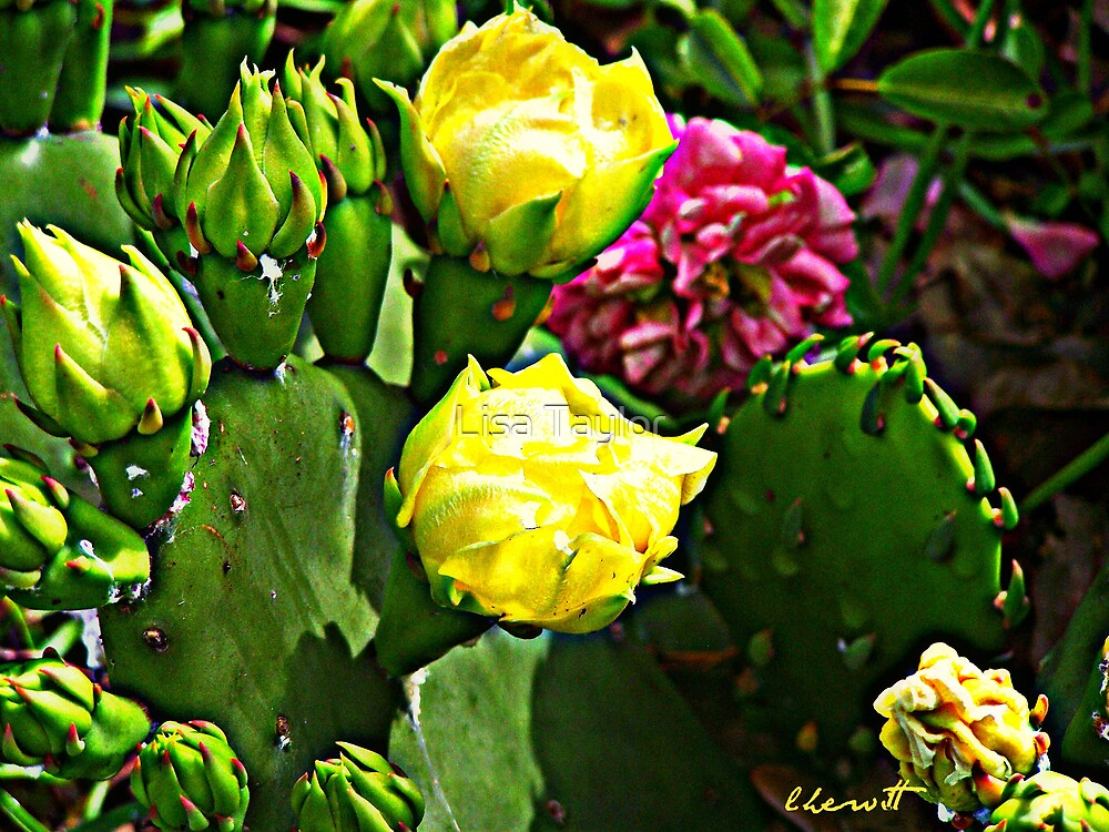 Cactus & Wild Rose by Lisa Taylor