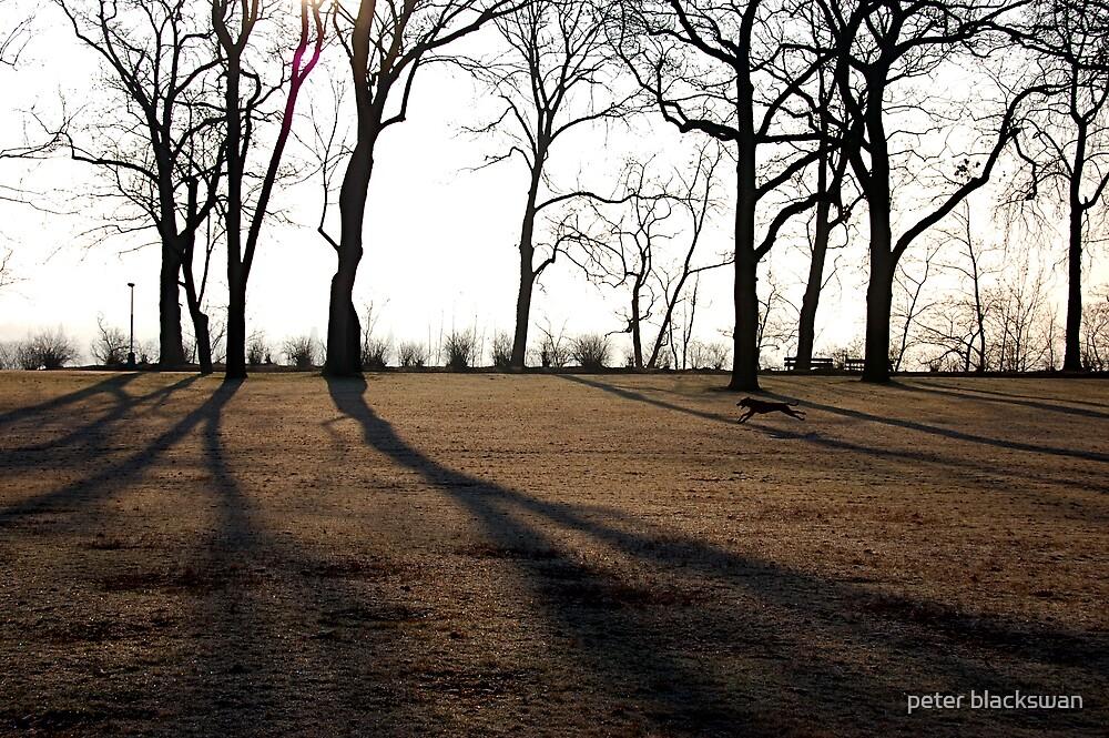 The Park by peter blackswan
