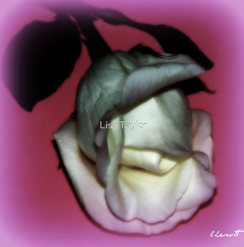 Ti Amo by Lisa Taylor