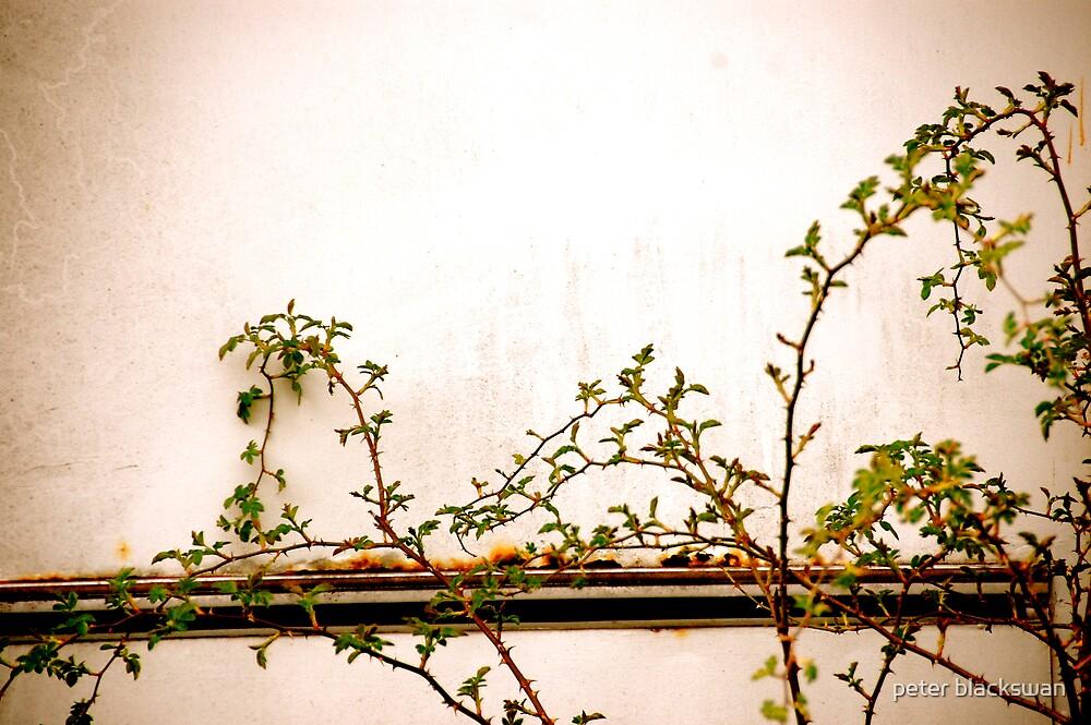 grow by peter blackswan