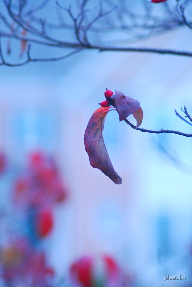 fall by jdpaulin