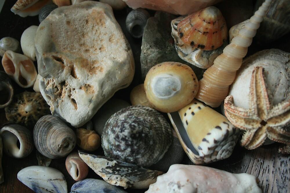 Sea Shells by Tasha  Blackmore