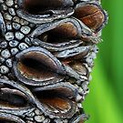 Old Banksia Pod by sienebrowne