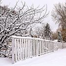 White Fence and Lots of Snow by Teresa Zieba