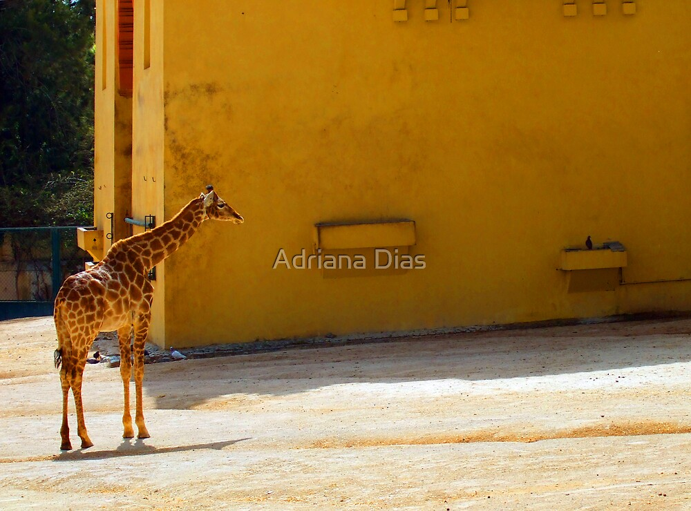 Giraffe by Adriana Dias