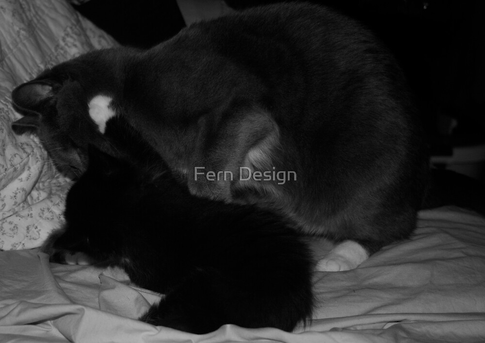 Brutus loving Lily Up by Fern Design