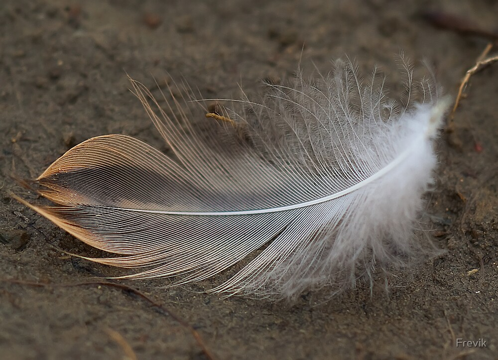 Feather by Frevik