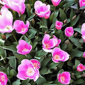 Delicate Pink Tulips Of Istanbul  by taiche
