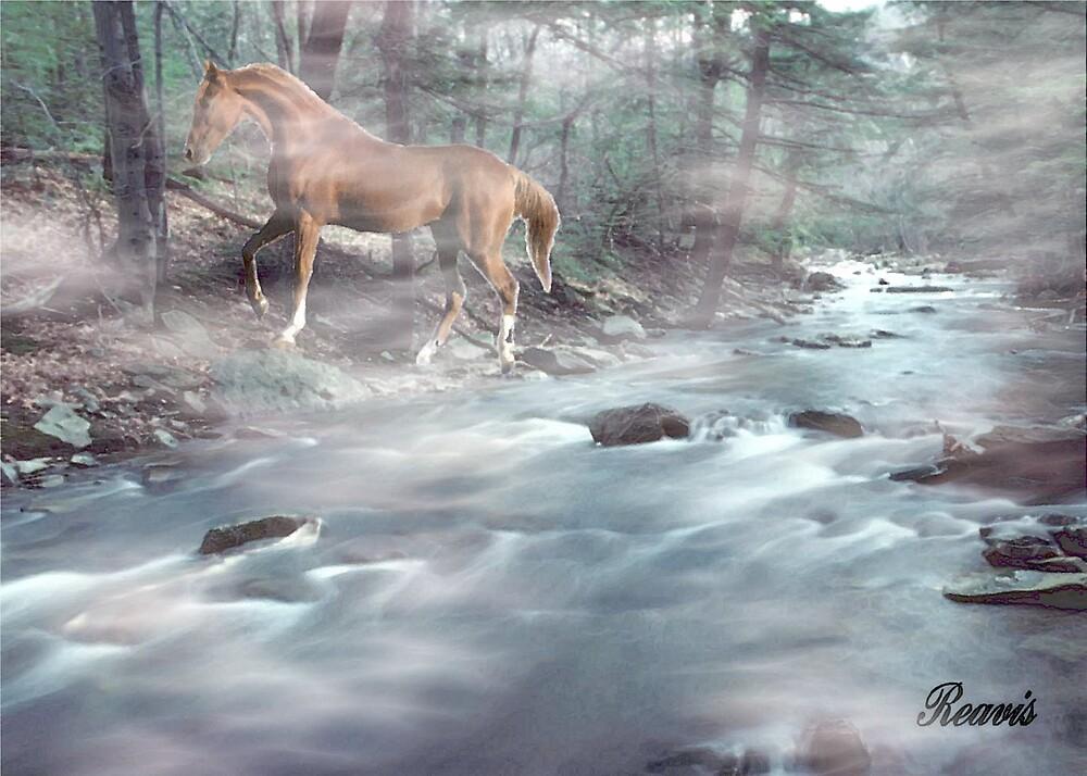 MORNING WALK by Robert Reavis