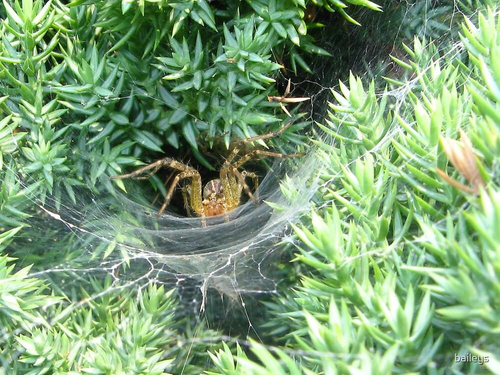 Creepy Spider by baileys