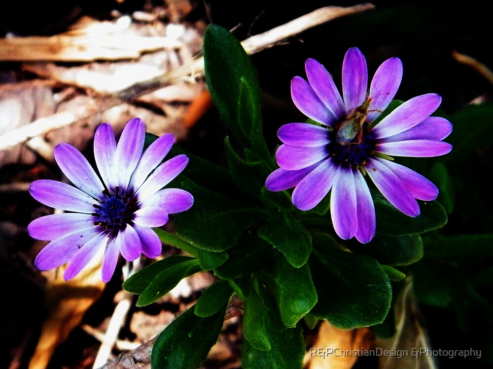Perfect Pair by R&PChristianDesign &Photography