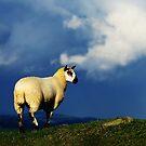 Lamb by thegreendogs