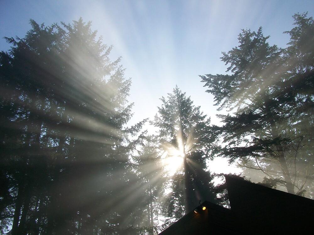 Sunbeam Thru The Trees by Sheri Scherbarth