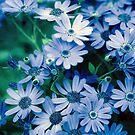 Bluer Then Blue by Rebecca Cozart