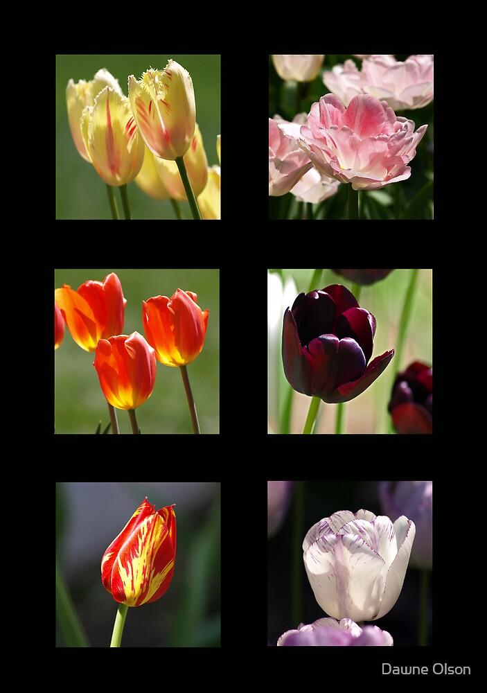 Tulips by Dawne Olson