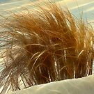 Winter Grasses by Lyle Hatch