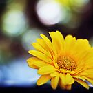 Bright as sunshine by Victor Oliveira