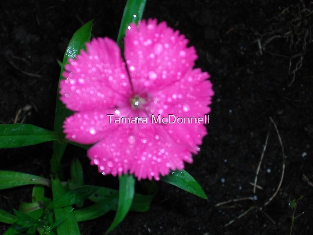 Precious pink by Tamara Lindsey