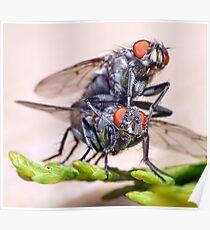 Mating Flies (3) ! Poster