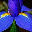 ~iris~ by Terri~Lynn Bealle