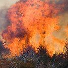 En Fuego, Hot Stuff by photosbyflood