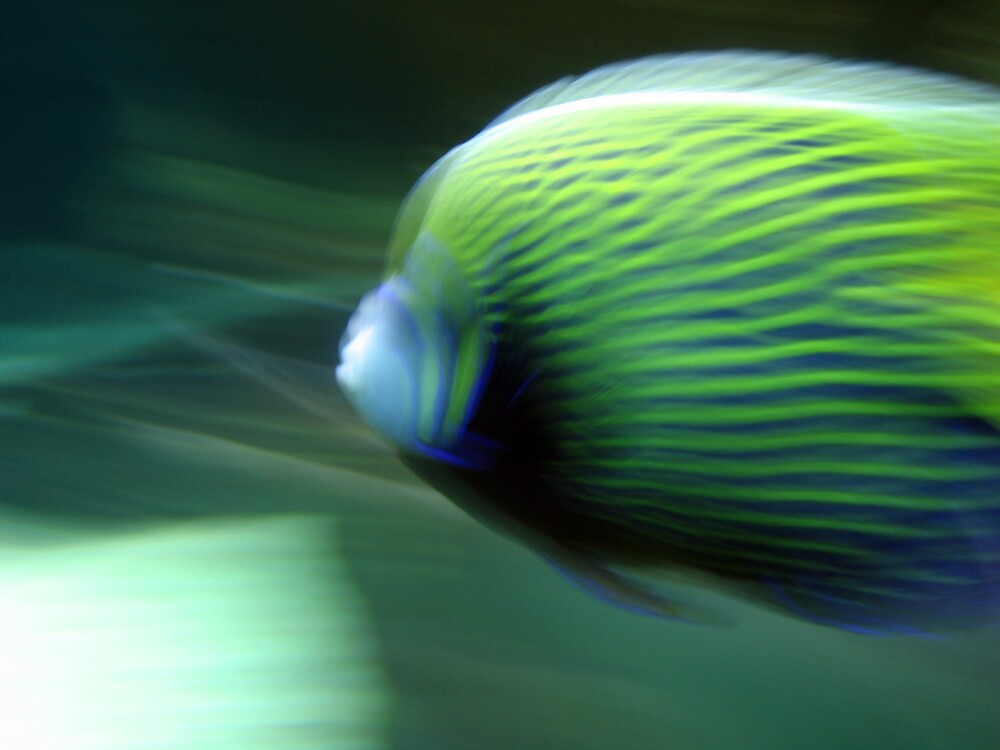 Tropical Fish by kenlange