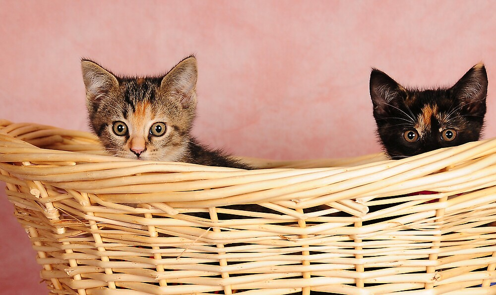 We are not coming out Lady! by Lover1969