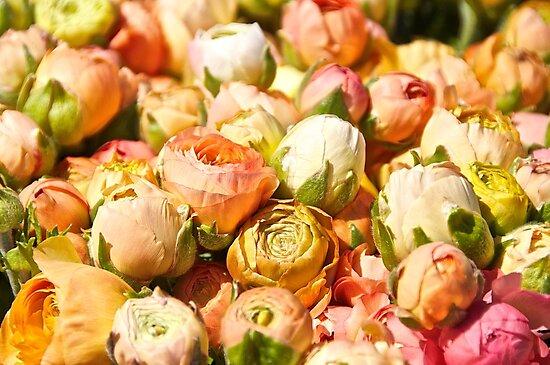 Vintage Roses by Cheryl  Lunde