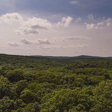 Forest View by lindsayosborne