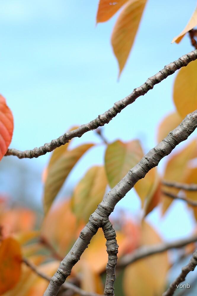 Tree branch by vonb