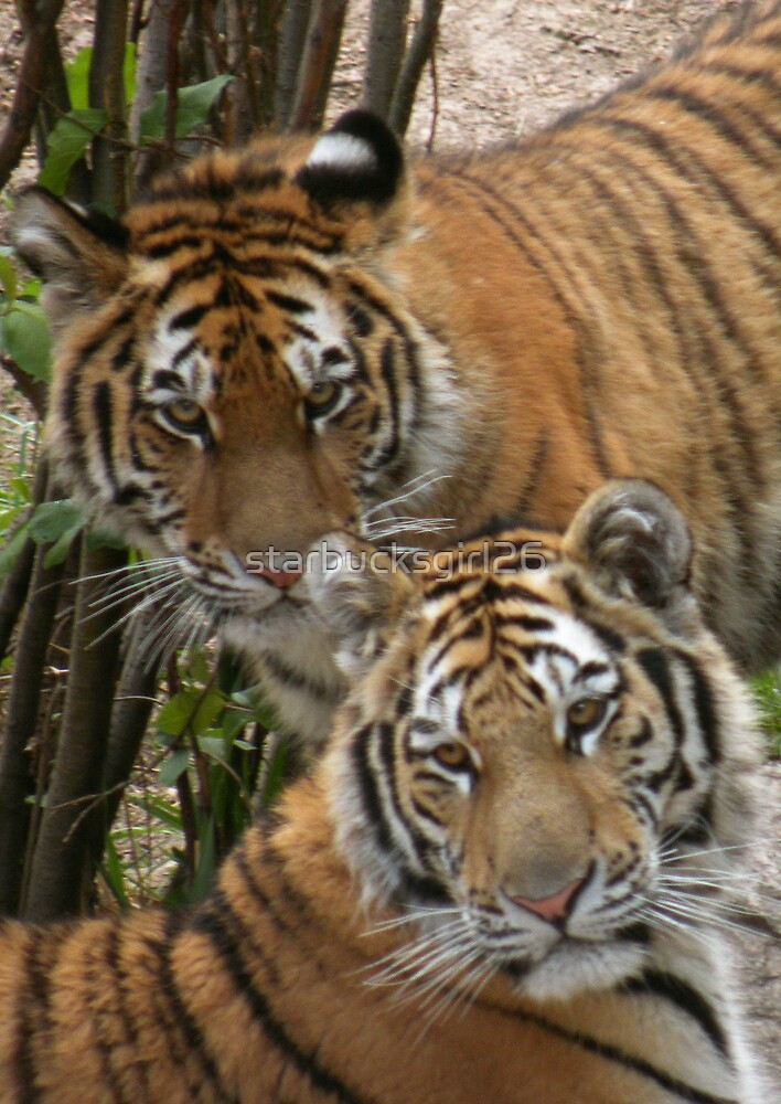 Young Cubs by starbucksgirl26