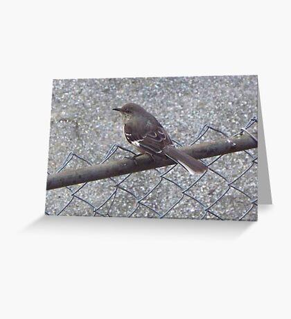 Mock - yeah - ing - yeah - bird - yeah - yeah - yeah  Greeting Card
