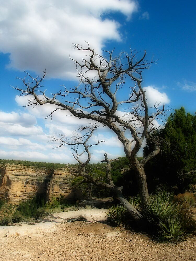 Grand Canyon Hanging Tree by laxwings