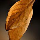 Leaves of Brown by crossmark