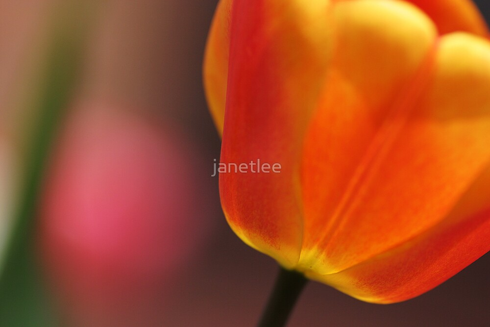 Spring Light by janetlee