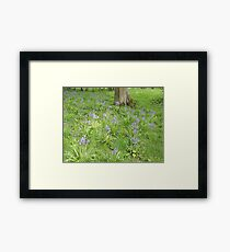 Bluebell Woodland (The Lake District)  Framed Print