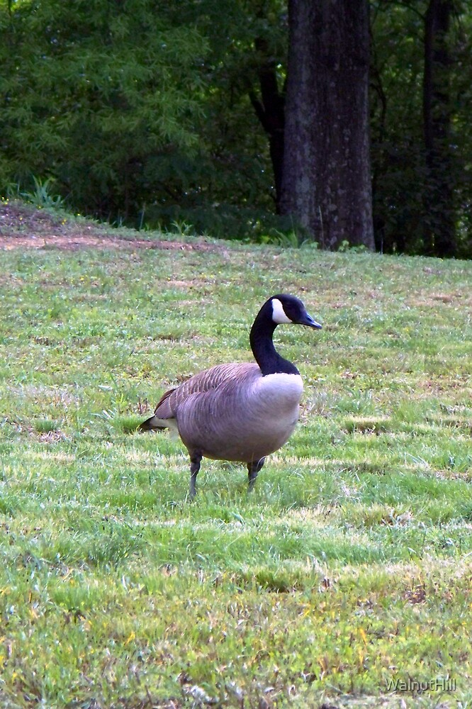 Wild Goose Chase 9 by WalnutHill