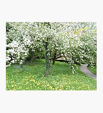 My Heart Betweeen Their Petals (White Blossom) Photographic Print