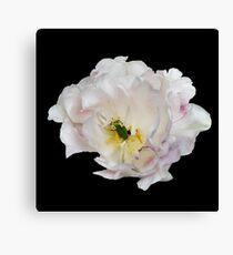 Beautiful white flower Canvas Print