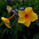 Trumpet Flower by Keith G. Hawley