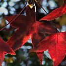 Autumn colours 6 by MikeO