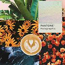 Pantone collage_1 by Darcy Schild