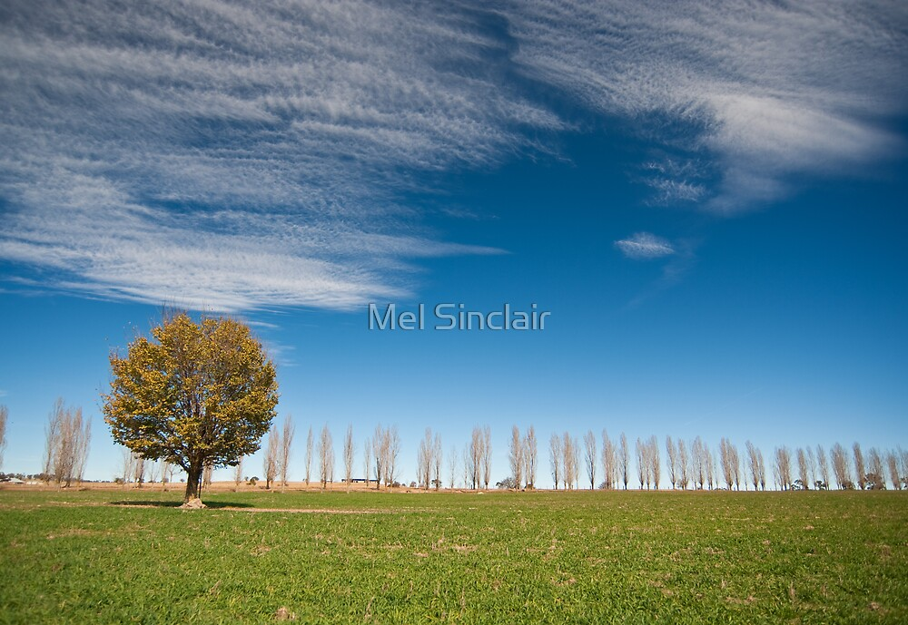 Lonely Tree by Mel Sinclair