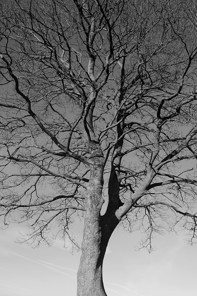 Robin Hoods Tree - Hadrians Wall by Ian Marshall