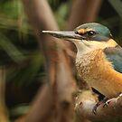 Kingfisher by Steve Bullock