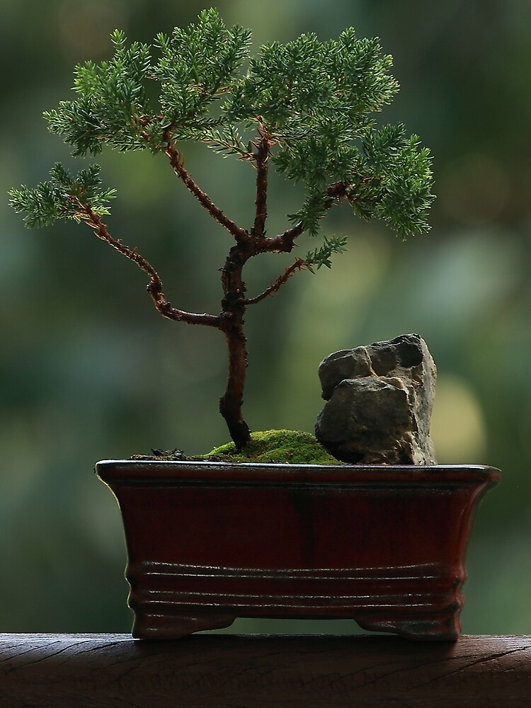 Little tree by Lew Brown
